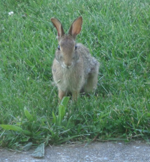 Bunnycrop