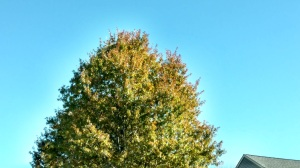 blue-sky-november